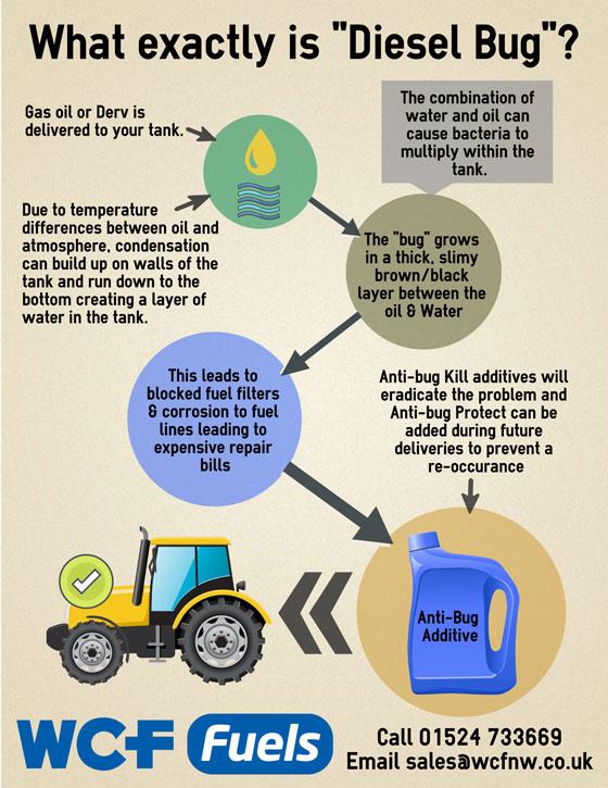 what is diesel bug rh wcfnw co uk Duramax Diesel Fuel System Diagram Diesel Fuel Pump Diagram